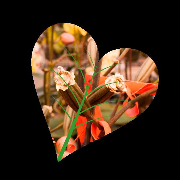 Orchideeen, Andijk, iPlant, Kwekerij,